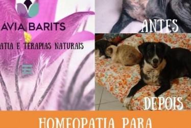 Cadela Lisbela e o Tratamento com a Homeopatia